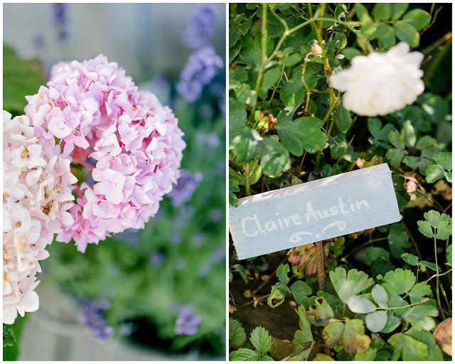 Rosenlabel, Gartenimpressionen