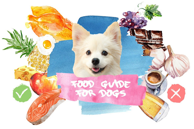 Ultimate Food Guide for Dogs: Approved, Harmful, and Allergies