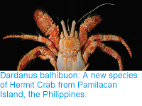 https://sciencythoughts.blogspot.com/2018/04/dardanus-balhibuon-new-species-of.html