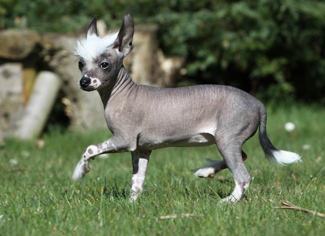 Psy hipoalergiczne, czyli psy dla alergików