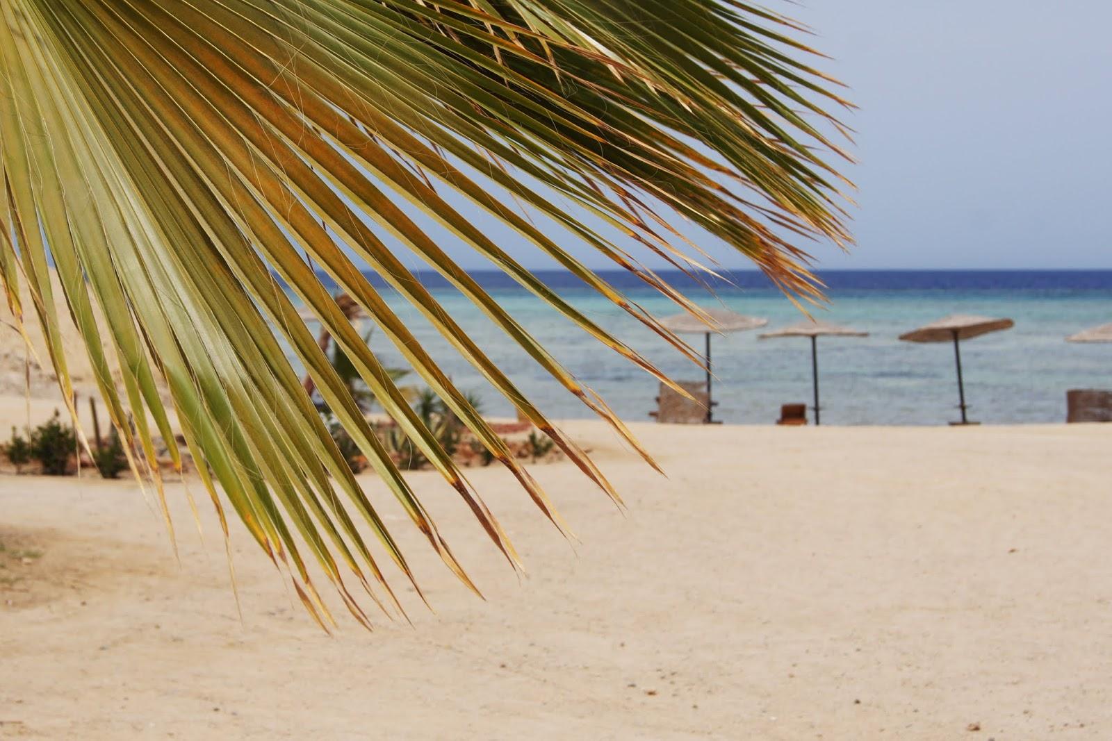 Afrykańskie słońce, rafy koralowe i turkusowe Morze Czerwone, czyli wakacje w Egipcie