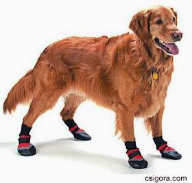 Hundskor Skydda tassarna på vintern | PetVillage.se
