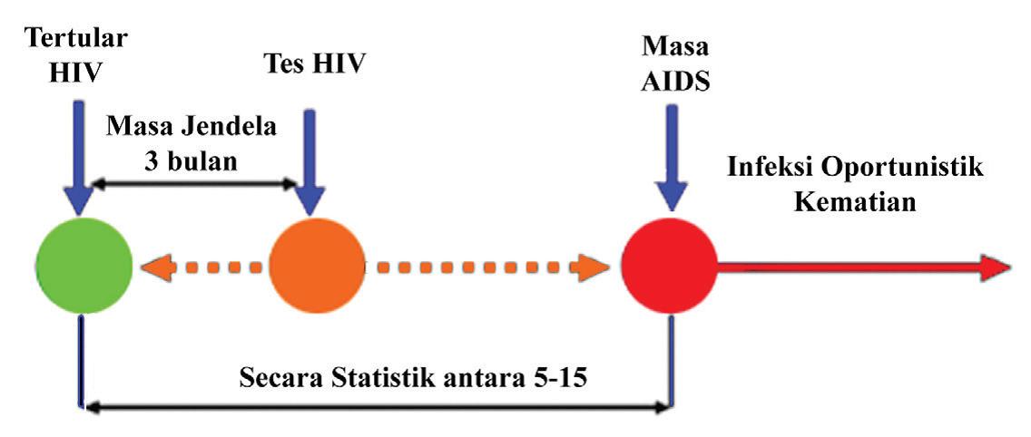 WOW ! Masa Inkubasi Penyakit AIDS Ternyata Begini