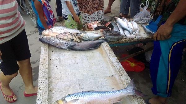 Ikan sungai baru beberapa jam sudah hampir habis diserbu pembeli