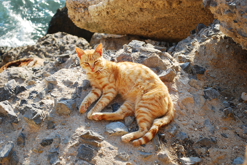 A cat sunbathing by the sea on a sandy beach