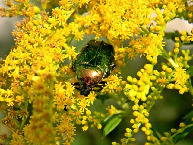 owady łąk, fauna polskich łąk i lasów