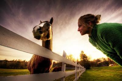 Increíble fotografía HRD caballo