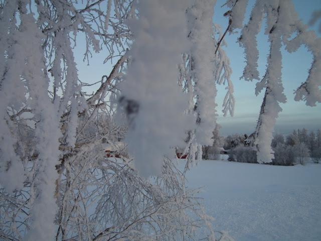talvi, kuura, hanki, pakkanen, tammikuu, taivas