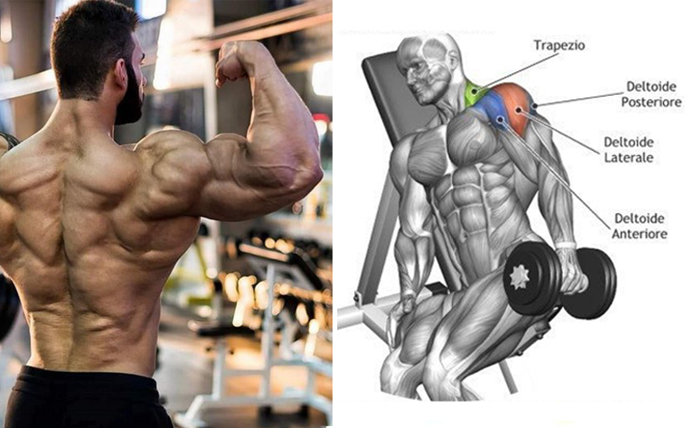 The Only 3 Exercises You Need To Do To Develop Monstrous Delts ...