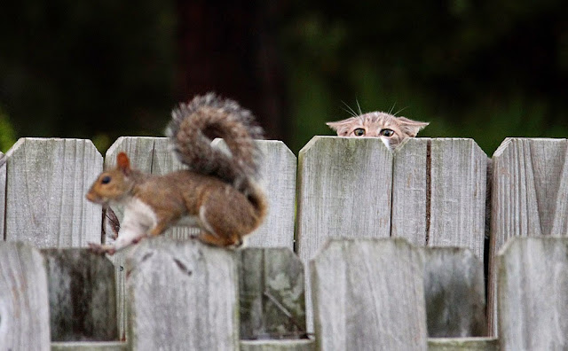Funny Cat Squirrel Soon Joke Picture