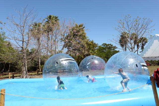 Zoo Miami zoologico - Bola de plastico