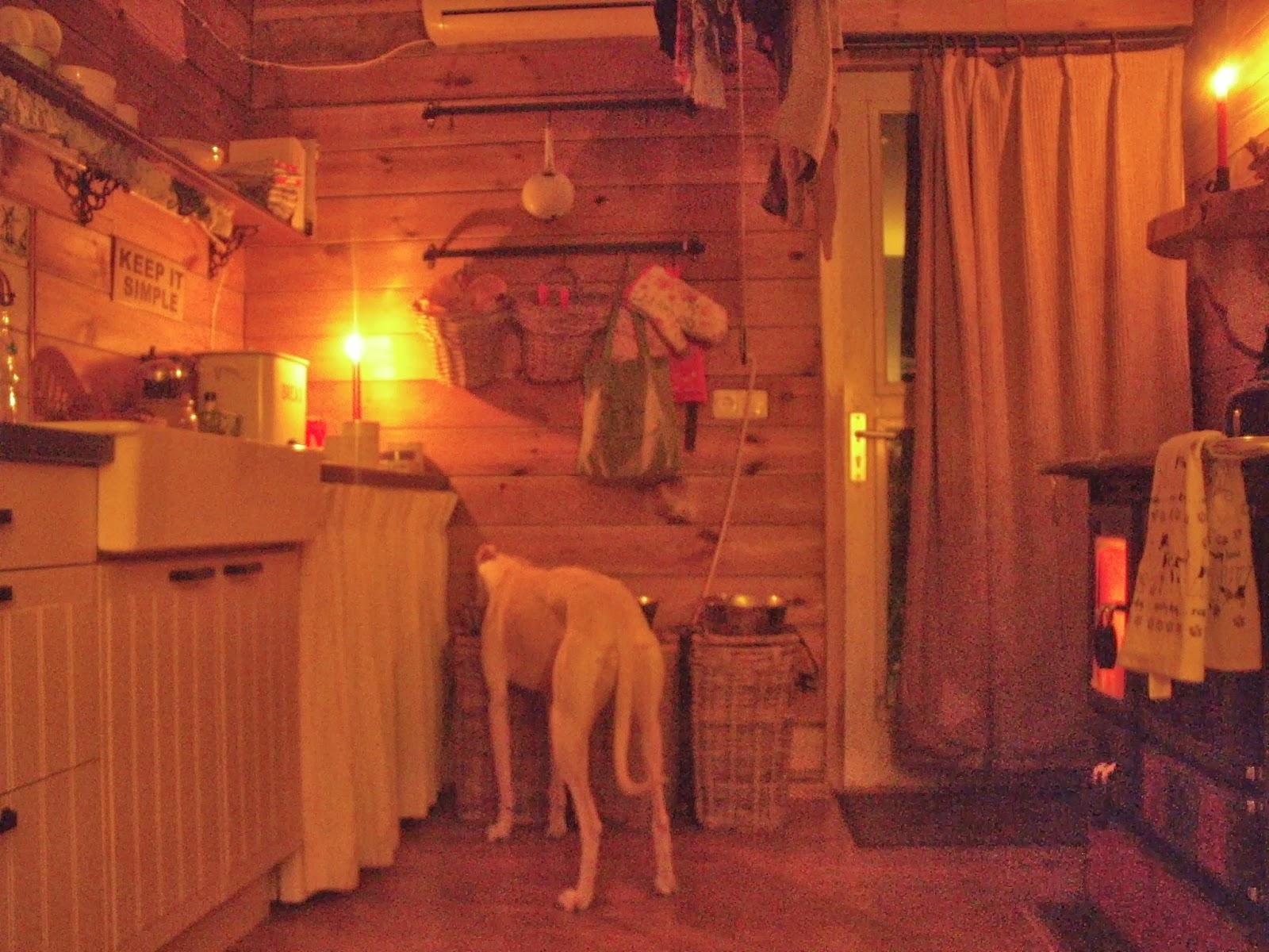 ANDERSON COTTAGE We zijn er klaar voor  Hondjes