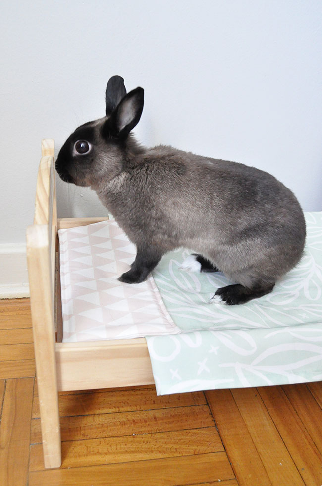 DIY Pet Bedding