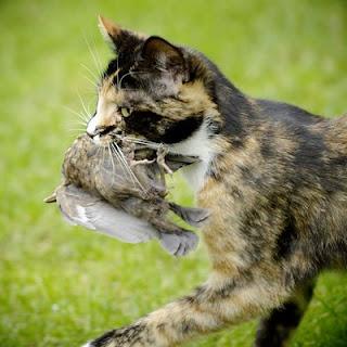 cat-and-bird.jpg