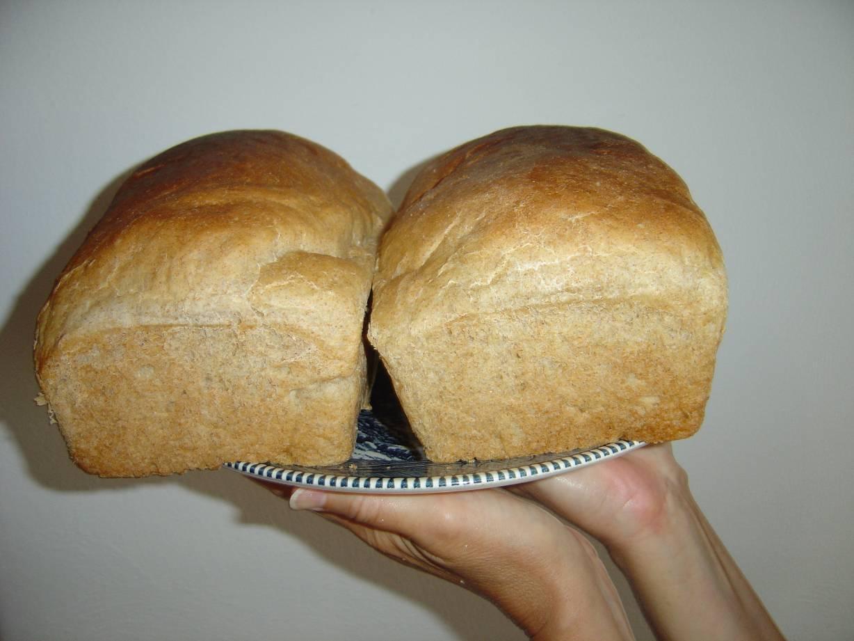 homemade whole wheat bread.jpeg