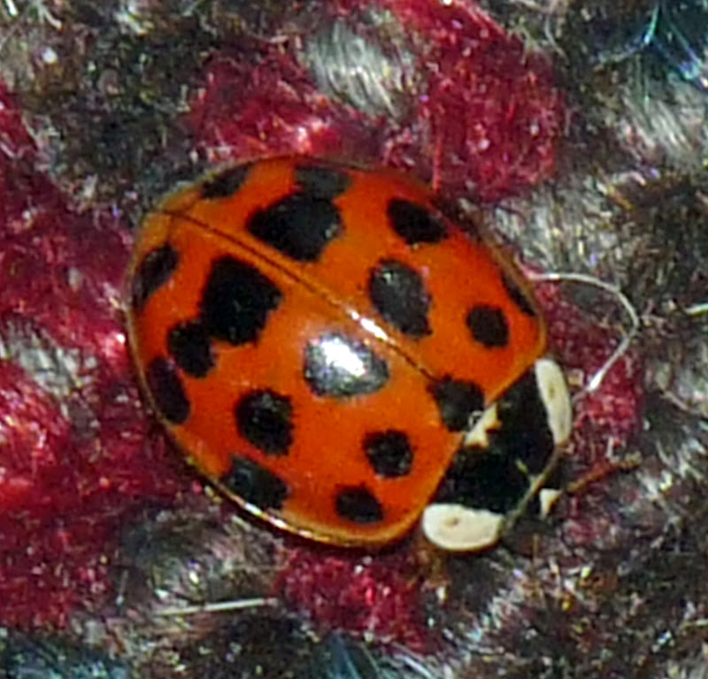 Wild And Wonderful Ladybird Alert 7