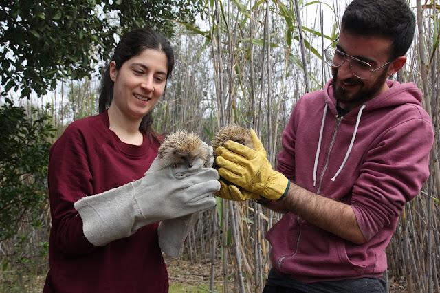 15 animais foram devolvidos à Natureza no último Sábado