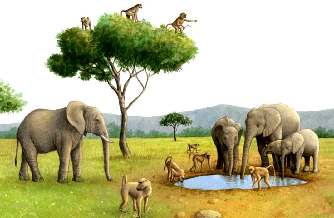 Elephants and Baboons