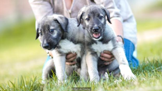 First ever identical twin puppies discovered by scientists