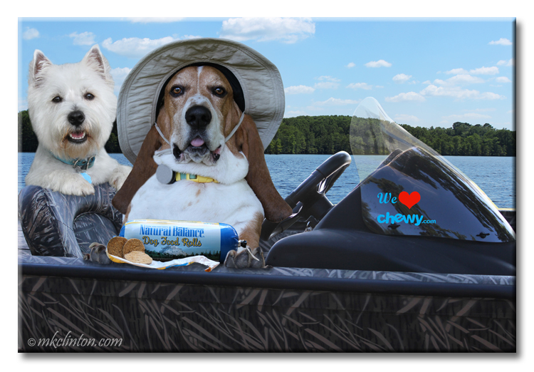 Bentley Basset & Pierre Westie enjoy Natural Balance Food Rolls on their boat