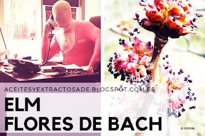 Elm, Flores de Bach para el Agotamiento