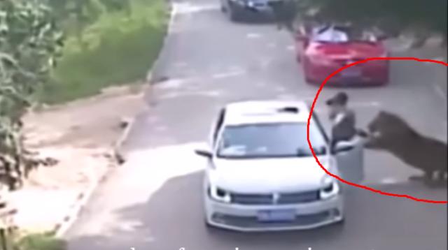 Heboh!!! Seorang Wanita Cantik Diserang Harimau Sampai Tewas, Nih Fotonya…