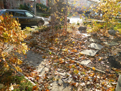 Toronto Greektown on the Danforth Fall Front Garden Cleanup before by Paul Jung Gardening Services