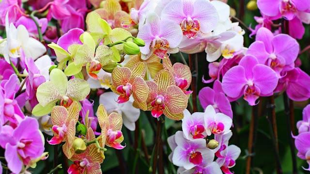 Flora Dan Fauna Maluku The Colour Of Indonesia