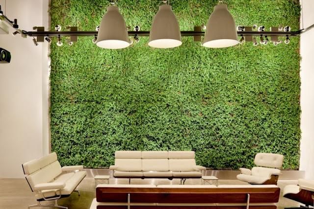Plants in Wall 6