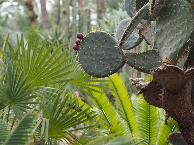 Cacti in huerto del cura