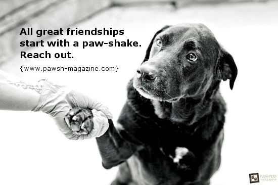 77 Quotes: Inspirational Quotes About Dog Rescue. QuotesGram