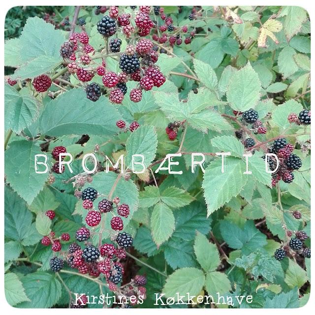 høsttid for tornfri brombær