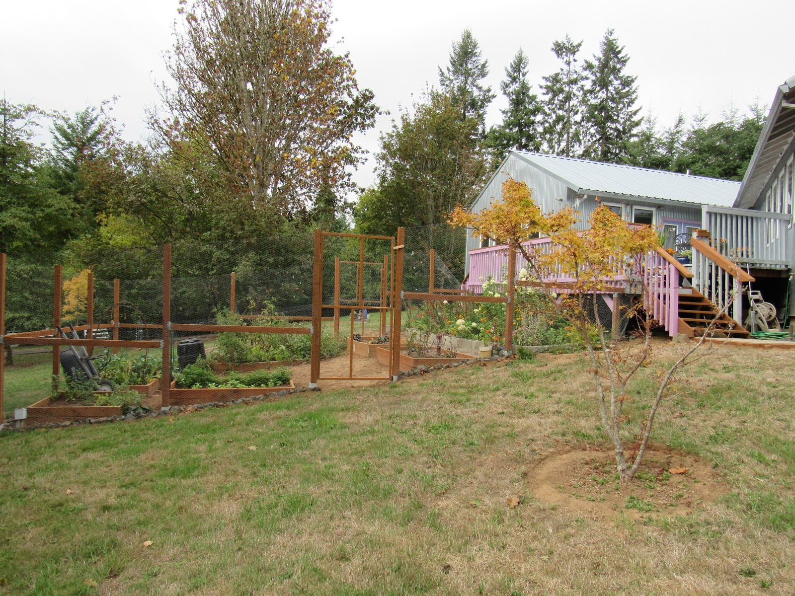 Before and After: A Garden Emerges