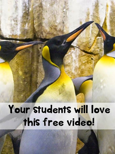 Penguins Teacher Humor Winter Teachers Pay Teachers Promoting-Success