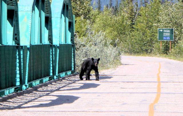 Schwarzbär in Kanada (C) Kundenfoto