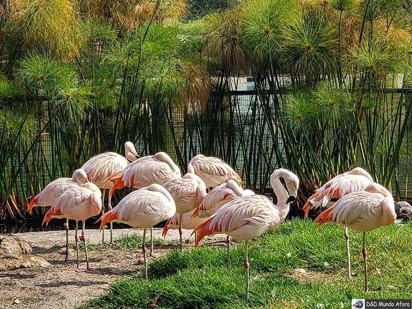 Flamingos no Parque Bicentenário - o que fazer em Santiago