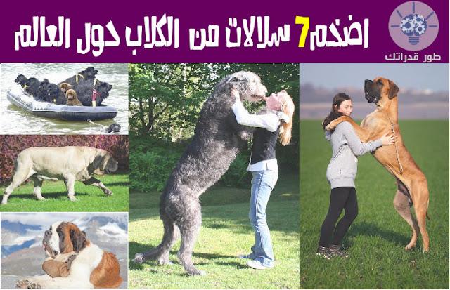 اضخم7 سلالات من الكلاب حول العالم
