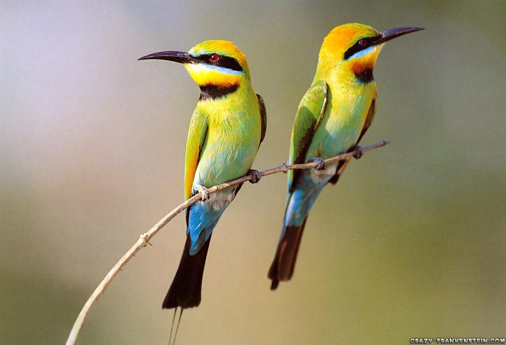 Animals Zoo Park: 7 Beautiful Birds Wallpapers for ...