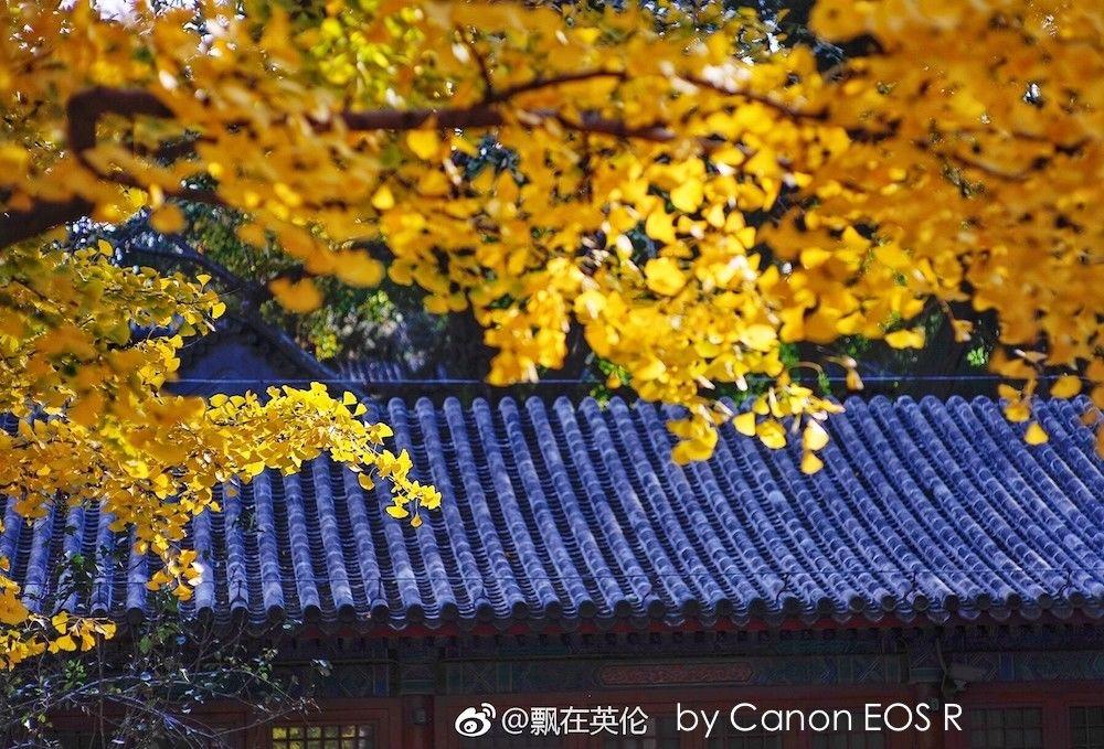 Желтые листья над синей крышей