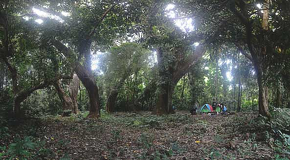 Outbound di Hutan Wonosadi
