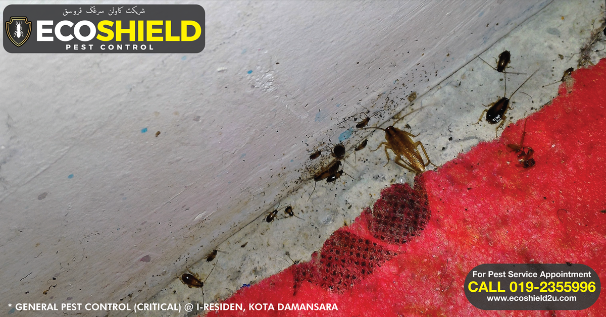 GENERAL PEST CONTROL (CRITICAL) : KOTA DAMANSARA