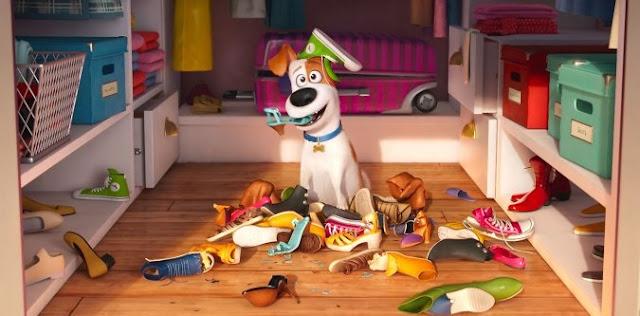 Film o życiu zwierząt domowych