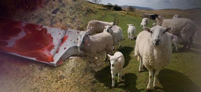 Του έσφαξε όλα τα πρόβατα του κοπαδιού αλλά ο δράστης δεν πρόλαβε να χαρεί...