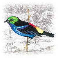 Saíra-Sete-Cores-da-Amazônia