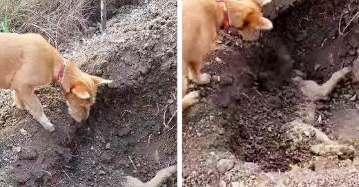 Momento emotivo en el que un perro entierra a su compañero