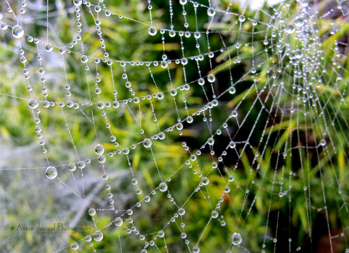raindrops in a cobweb