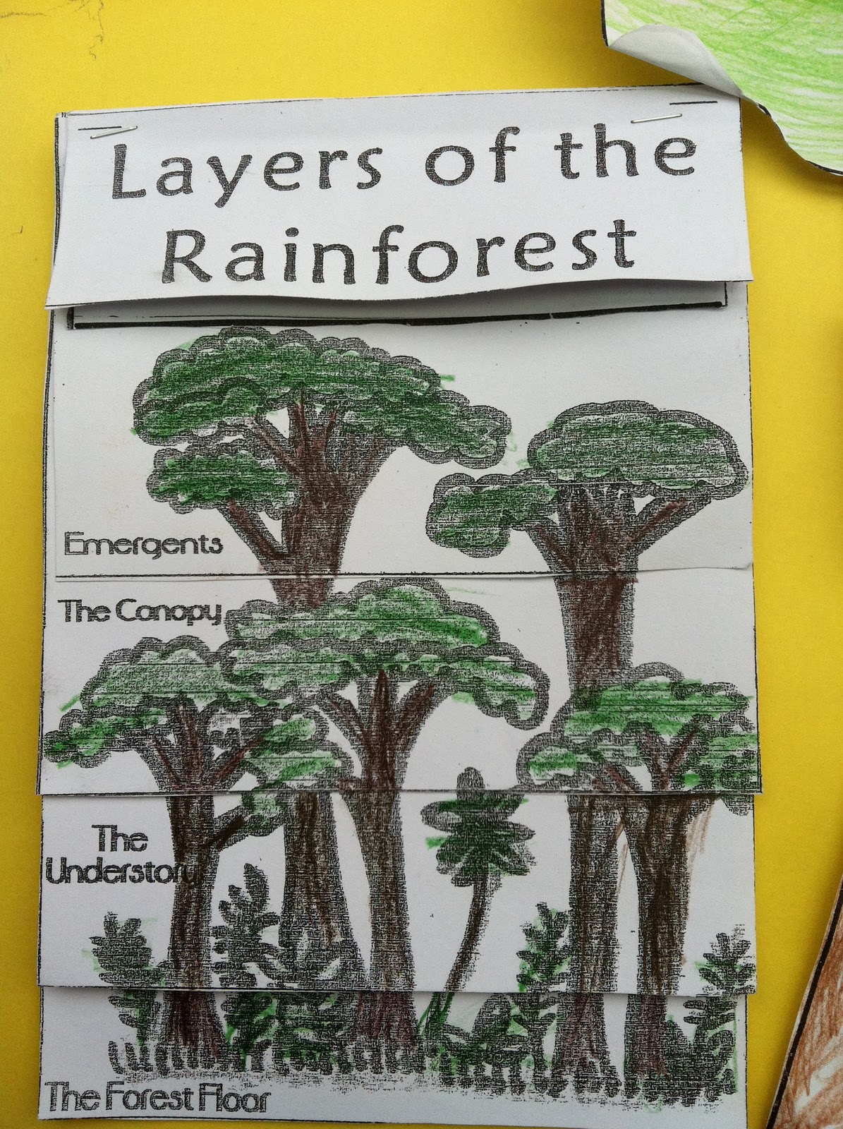 4 Layers Of The Rainforest For Kids