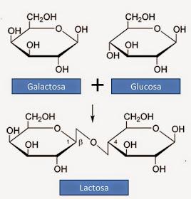 Dulce de leche Titanic: Composicion quimica