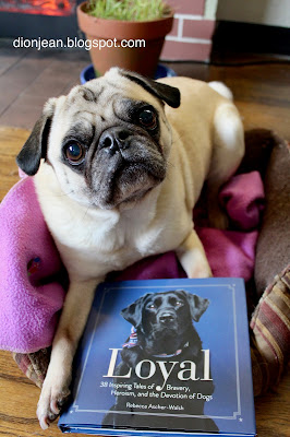 Liam the pug with his book