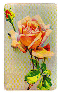 rose flower image botanical art